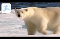 100 Tiere unserer Erde (Dokumentation, Deutsch, Tierdoku, Schulfilm, Lehrfilm, Doku für Kinder)