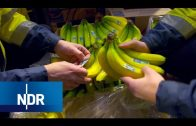 Obst aus aller Welt: Fruchthandel in Hamburg | Wie geht das? | NDR Doku
