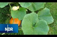 Gartenträume: Giersch, Gigant und grüner Daumen | die nordstory | NDR Doku