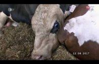 """37 Grad – Geheimsache Tiertransporte """"Wenn Gesetze nicht schützen"""" – Doku HD"""