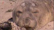 3sat Baja California Das andere Kalifornien Doku (2005)