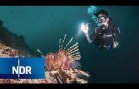 Abenteuer unter Wasser – Die Submaris | die nordstory | NDR