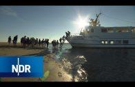 Arbeiten im Wattenmeer | die nordstory | NDR