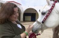 [ARTE] 360° Geo Reportage Jordanien, Dynastie der Pferde