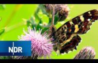 Artenreiches Niedersachsen: Oasen an der Ilmenau | NaturNah | NDR Doku