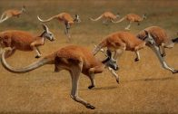 Australien – Eldorado der Natur