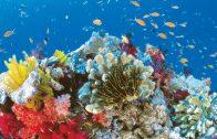 Great Barrier Reef Deutsch – HD DOKU