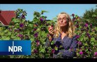 Bauernhof: Stärkung für die Apfelbäume | Hofgeschichten | NDR Doku