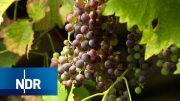 Bauernhof: Weinernte im Alten Land | Hofgeschichten | NDR Doku
