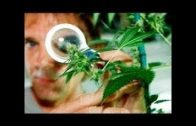 BBC How Plants Communicate vesves Think Amazing Nature Documentary BBC horizon 2017
