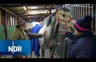 Bauernhof: Neue Frisur für den Jungwallach | Hofgeschichten | NDR Doku