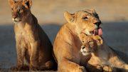 Bedrohtes Paradies – Afrika zwischen Wilderei und Artenschutz [Doku 2017]