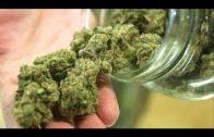 Cannabis – Medizin oder Droge? Ist das Verbot nach wie vor sinnvoll?