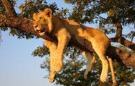Das Leben der Tiere in Afrika