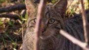 Das geheime Leben der Katzen I SWR