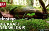 Das Geheimnis der wilden Wälder – Einstein vom 29.6.2017