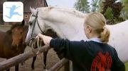 Das Gestüt – Teil 3 – Hengstalltag (Dokumentation über Pferde, Tierdoku, deutsch, Schulfilm)