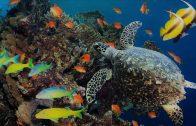 Das Leben zwischen den Korallenriffen
