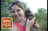 Das Tannenzapfentier  | Reportage für Kinder | Anna und die wilden Tiere