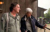 Der Adlerflüsterer – Pierre Schmidt ist Falkner aus Leidenschaft – planet e – ZDF