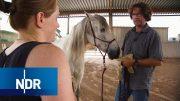 Der Pferdeversteher – Zurück zu den Wurzeln   Doku & Reportage   NDR Doku