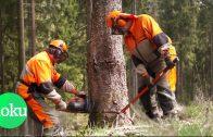 Deutsche Wälder in Gefahr: Ist unser Wald noch zu retten?    WDR Doku
