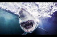 ★ Die gefährlichsten Haie der Welt – Doku 2017 NEU *HD*