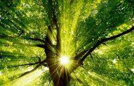 Die geheimnisvolle Welt der Bäume – Wald Wälder Doku Dokumentation HD deutsch