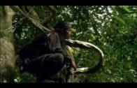 Die Kunst der Anpassung Borneo (ARTE Doku in HD)