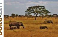 Die Serengeti – Natur Dokumentation 👉 HD – Doku-Zeit