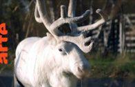 Die Waldretter: Rentierzüchter vs. Industrie | Doku | ARTE