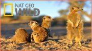 Documentary National Geographic Wild Kalahari BBC Documentary Wildlife Animals