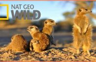 Documentary National Geographic Wild Kalahari BBC Documentary Wildlife Animals