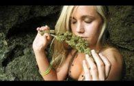 Doku – Cannabis muss legalisiert werden | Drogen Experte im gespräch