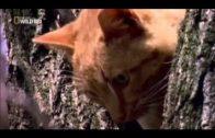 Doku Deutsch Doku 2015 Süßesten Katzen Der Welt! must Watch!