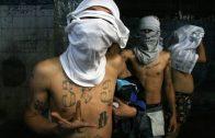 DOKU Die Gefährlichsten Gangs der Welt  [Neu]