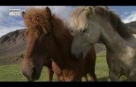 (Doku in HD) Im Bann der Pferde (1/4) Marokko