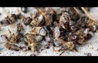 Doku Insektensterben Wie gefährlich ist das für uns ? Dokumentation deutsch arte 2019 HD