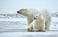 Doku Skandinavien  Der Ruf der Natur  Spitzbergen und der Eisbär Doku HD 2016