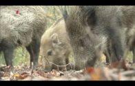 Doku – Umwelt und Natur Tierisch alt!(1 von 5) Lange leben
