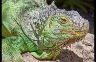 Dokumentation Tiere deutsch NEU  ►Karibik Doku Tierreich 2018 HD◄