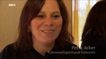 Drogenspürhunde im Frankfurter Flughafen Dokumentation 2017 HD NEU