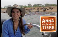 Ein Fluss voller Flusspferde  | Reportage für Kinder |Anna und die wilden Tiere