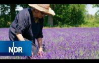 Ein Hauch Provence im Norden: Bio-Lavendel aus Niedersachsen | NaturNah | NDR Doku