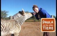 Eine Herde für Zebra Benny  | Reportage für Kinder | Paula und die wilden Tiere