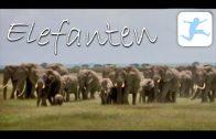 Elefanten am Kilimanjaro (Lehrfilm, Dokumentation deutsch, kostenlose Doku, in voller Länge)