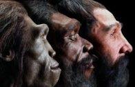 Evolution Die Geschichte des Lebens Teil 1