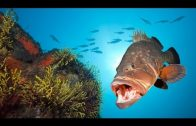 Expedition Mittelmeer – Mythen