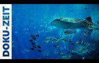 Geheimnisvolle Hochseeoasen – Unterwasser Doku 2012 hd 720p