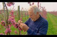 Familienerbe NRW (1/4) Die Obstbauern vom Niederrhein